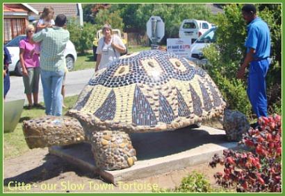 Our slow town tortois
