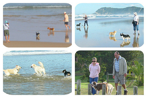 Sedgefield dogs with their owners and playing on the beach