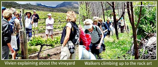 Herold winelands
