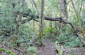 Jubilee Forest Trail