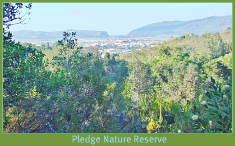 Pledge Park, Knysna