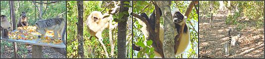 Monkeyland at Plettenberg Bay