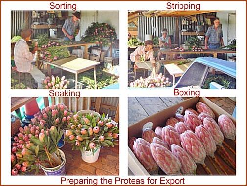Preparing flowers for marke