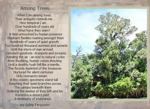 Among tree
