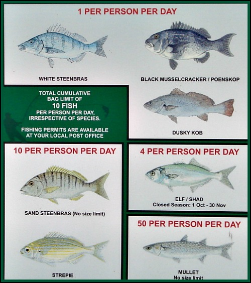 Info on daily bag limits of various fish found in the lagoon.