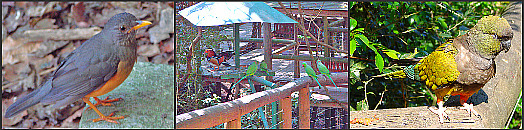 Bird watching at Birds of Eden