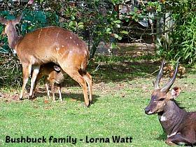 Buskbuck group