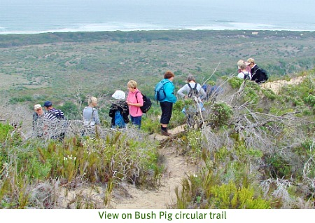 Bush Pig Trail
