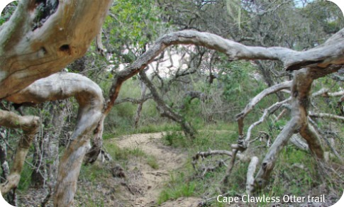 Cape Clawless Otter Trail