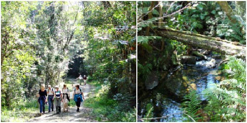 Walking along a logging track and then next to a stream