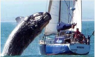 whale crash landing