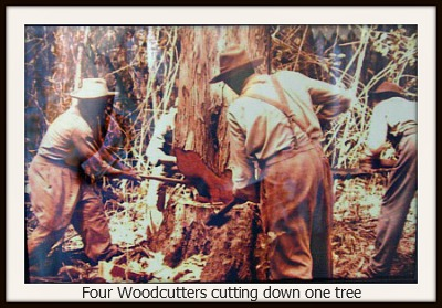 4 woodcutters chopping down a large tre