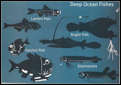 Fish of the ocean Deep