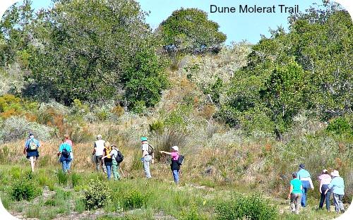 Dune Molerat Trail