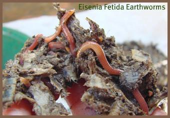 A worm farm