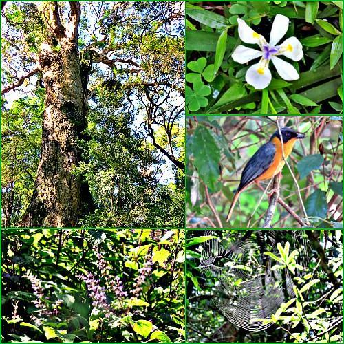 Fabulous Knysna indigenous forest walk