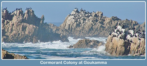 Cormorant Colony Buffalo Bay