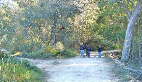 Karatara Forest Walk