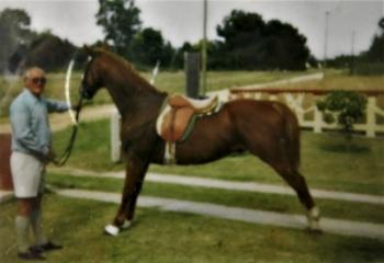 Horse fence model
