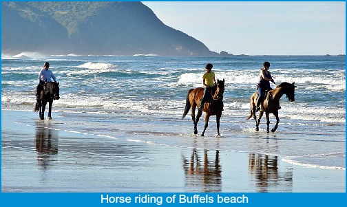Horse Riding on Buffalo Bay beach at low tide