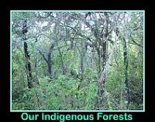 Cape Indigenous forests