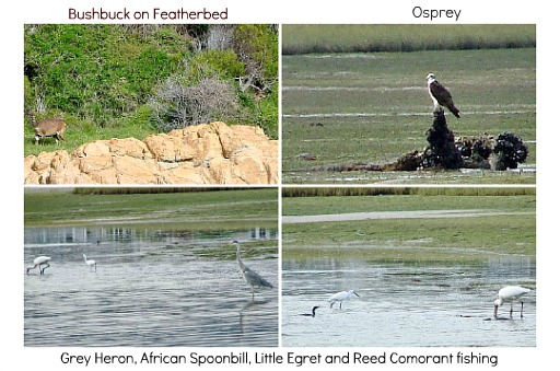 Wildlife around Knysna lagoon