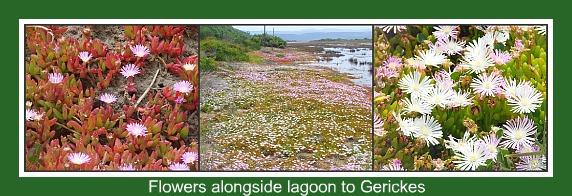 wild flowers next to the Swartvlei lagoo