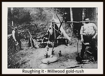 Millwood goldrus