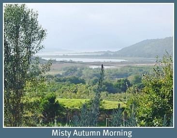 Downunder farm misty mornin