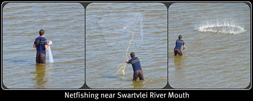 A young man net fishing near the Swartvlei River mouth.