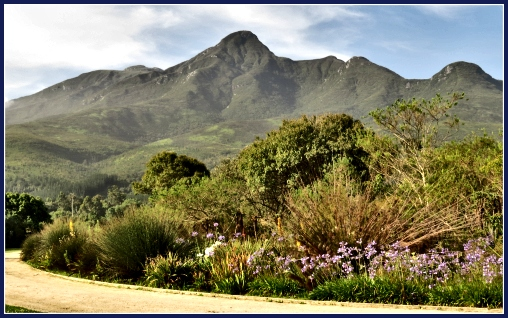 The Outeniqua Mts. from the George Botanical Gardens