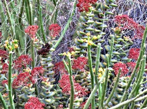 Pathway Wildflowers