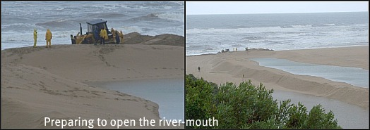 Preparing to open Swartvlei river mouth