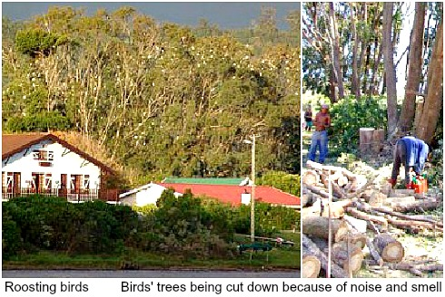 Egrests'roosting trees removed