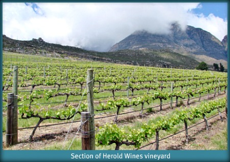 Vineyard on mountain-side