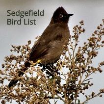 Link to Sedgefield Bird List