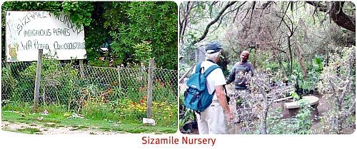 Pedro's Sizamile Nursery