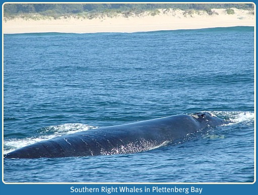 Southern Rights at Plettenberg Bay