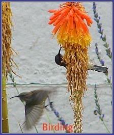 Bird watching on the Garden Route