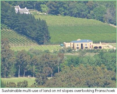 Vineyards on Cape mt slopes