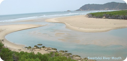 Swartvlei Carpark to River mouth