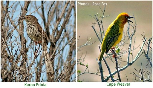 Birds to be seen in Addo