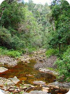 Giant Kingfisher Trail