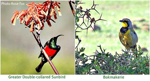 Bird charmers
