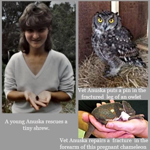 Anuska's Rescues