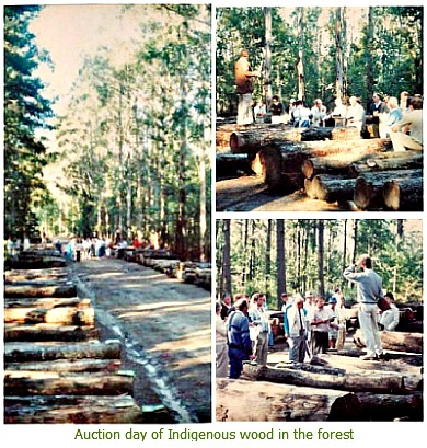 Auction of indigenous wood