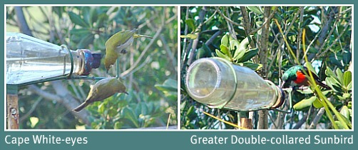 Some of the local bird-life at the feeder