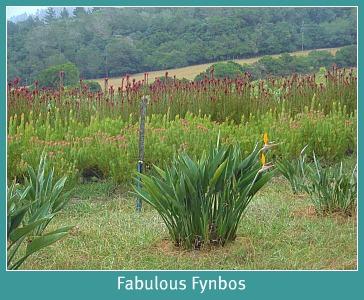 Farm fynbo