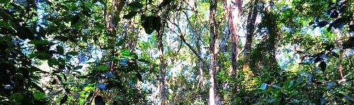 Forest ferns, pathways & streams