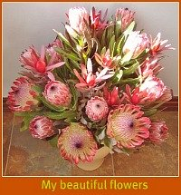 A bunch of beautiful proteas from the farm